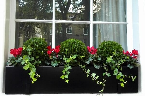 Bespoke metal window box with boxwood balls