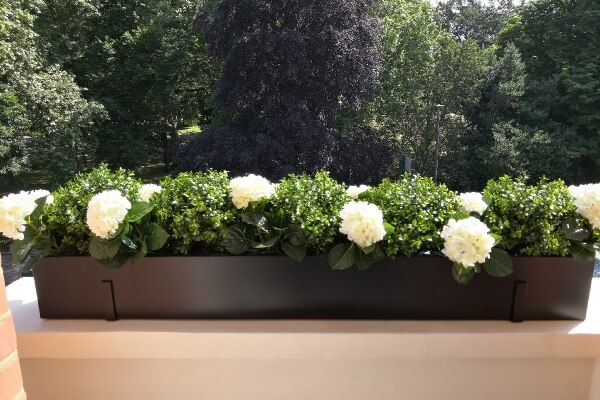 Artificial Buxus balls and hydrangea