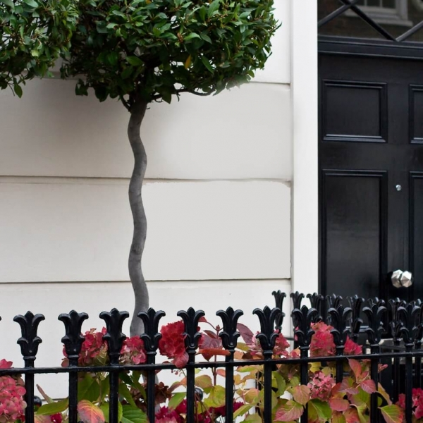 Front door planter Bay tree twisted stem