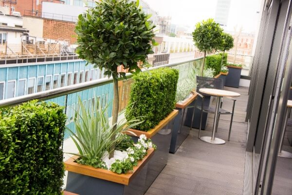 Roof terrace Fitzrovia Bay Tree Buxus Graphite grey planters with hardwood capping