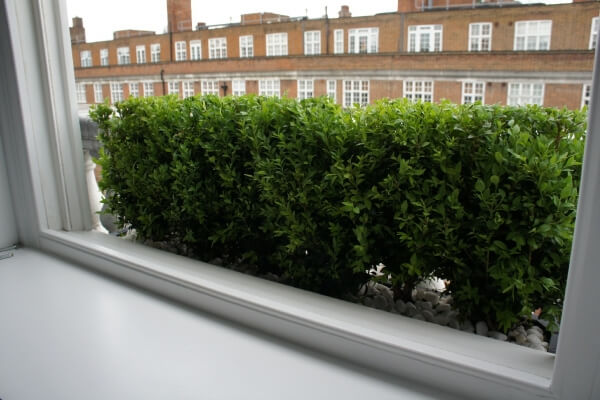 Window box Buxus hedge
