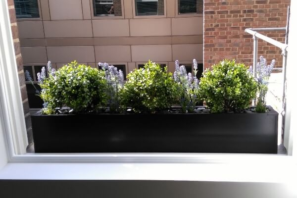 Window box with artificial buxus balls and lavender