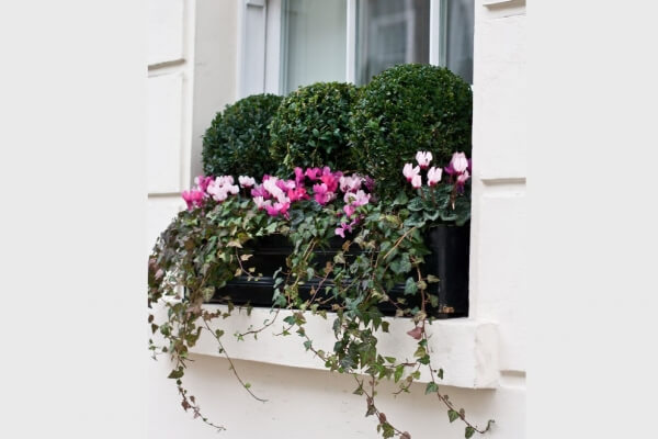 Windowboxes London