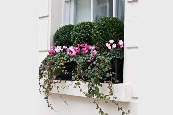 Windowboxes London