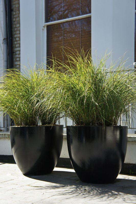 Contemporary planters outdoor planters designer for Tall ornamental grasses for pots