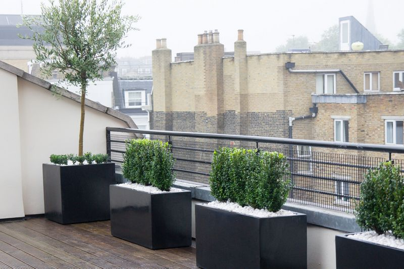 Roof terrace design roof terrace planters outdoor for Alberelli da terrazzo