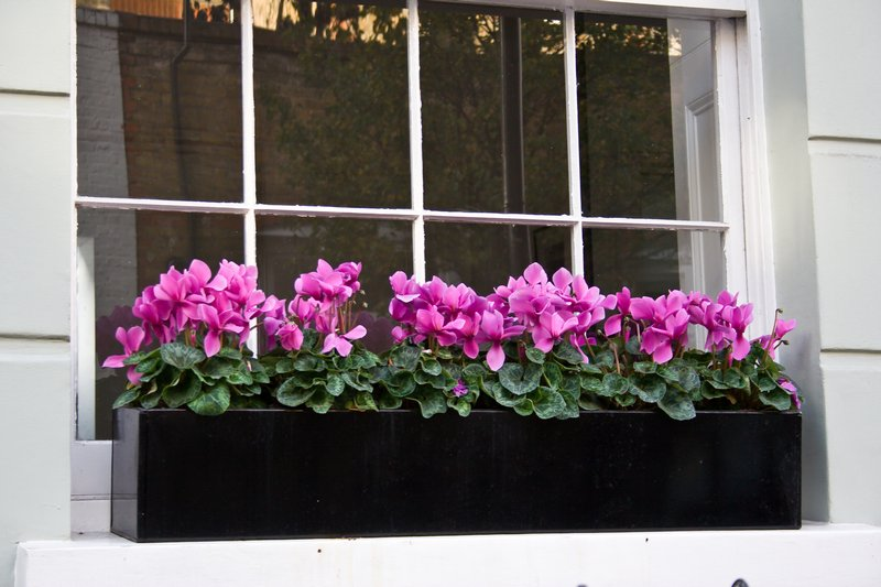 Window Box Planter Flowers Window Planter Box Ideas