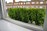 Buxus.hedge.in.high.galvanized.steel.planters