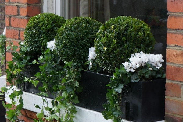Polystone window box planted with Buxus balls and flowers
