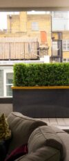 Roof Terrace Fitzrovia Buxus Hedge